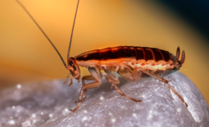 Getting rid of roaches in appliances