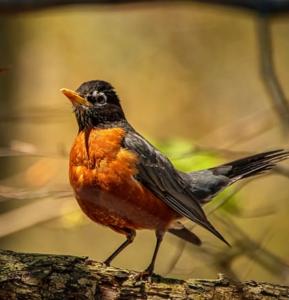 Keep birds off of porch